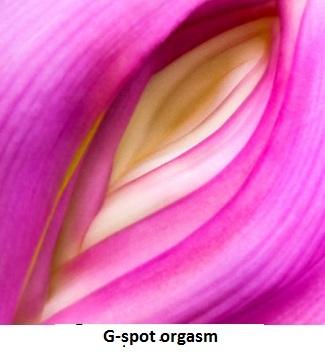 types of female orgasms